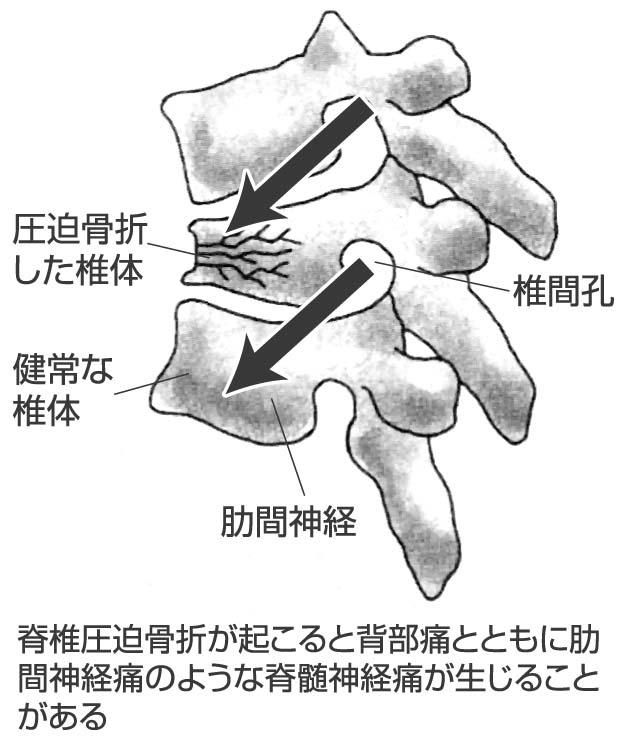 公益社団法人 鳥取県医師会